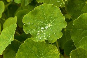 raindrops on green plants