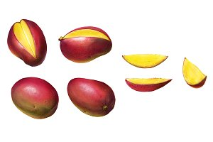 Mango Color Illustration Isolated