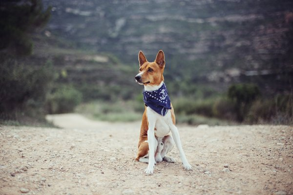 Cute adorable dog with blue collar