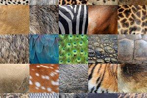 Animals skin