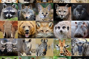 Wildlife animal portraits