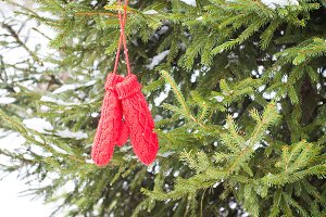 Red mittens hanging on fir tree.
