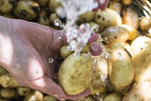 Washing freshly harvested potatoes.
