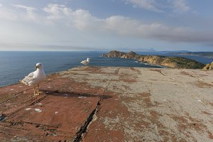 Seagulls in Cies Islands.