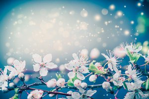 Beautiful spring blossom on blue