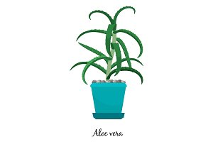 Aloe vera plant in pot icon
