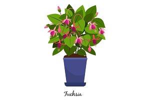 Fuchsia plant in pot