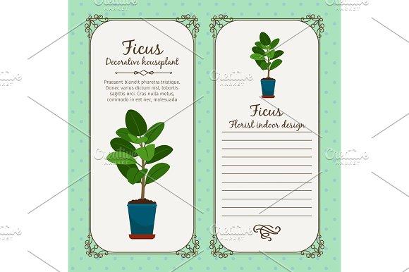 Vintage Label With Decorative Ficus Plant