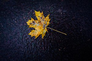 Autumn leaf. Photography.