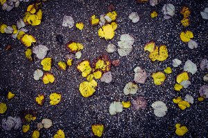 Autumn Leaves. Photography.