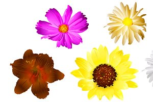 Flowers Vector Elements