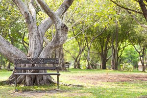 Bench under the tree