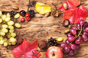 Autumn background with grapes.