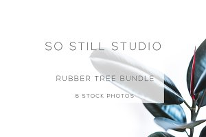 Rubber tree bundle stock photos