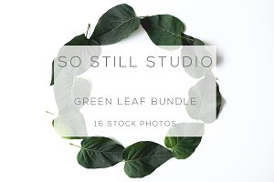 Green leaf stock photo bundle