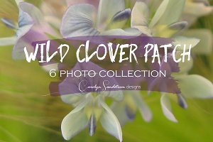 """""""Wild Clover Patch"""" Photo Collection"""