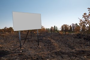 Blank billboard in a burned plot