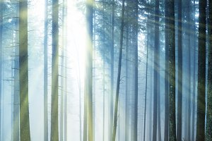 Forest with mysterious fog