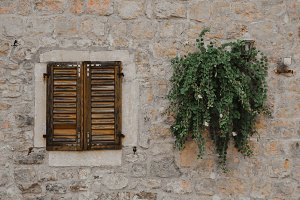 Wall, window and plants