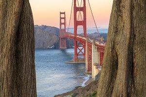 Golden Gate Bridge Through Cypresses