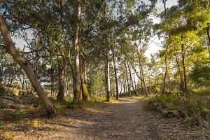 Hiking trail in Cies Islands.