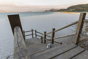 Seagull in Beach of Rodas.