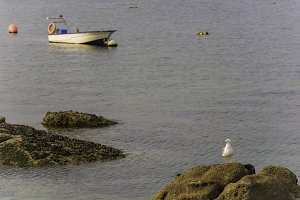 Seagull and boat in Galicia.