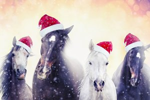 Christmas horses with Santa hat