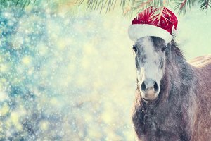 Horse with Santa hat for Christmas