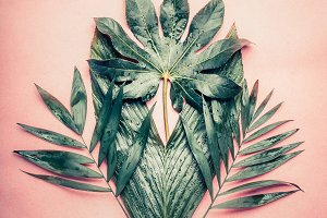 Creative Bunch of tropical leaves