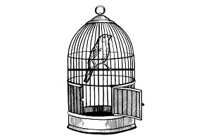 Canary bird in cage engraving vector illustration