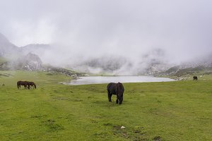 Wild horses in Lakes of Covadonga.