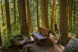 Lynn Canyon park in Vancouver