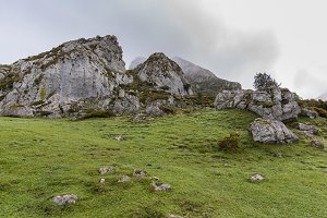 Meadows of Covadonga Lakes.