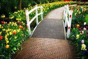 Stone walk way in garden