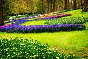 spring flowers in holland garden