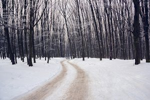 winter forest with the footpath