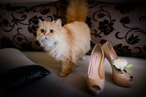 A cat standing near bride`s shoes