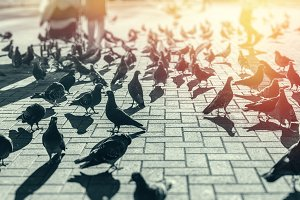 Pigeons on the town square between the people of tourists, city life, Black And White Image. Recreation Holiday Concept