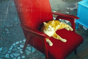 Red Cat Is Sitting On A Red Armchair. Home Outdoor Pets Concept