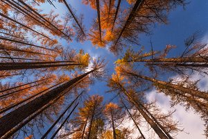 Look up in the autumn forest