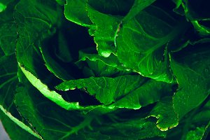 Chinese cabbage on the table with drops of water