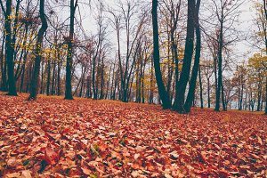 Autumn forrest. Yellow and red leafs on the ground