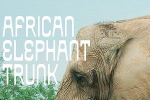 African Elephant Trunk