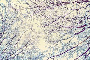Hoar frost covered tree branches