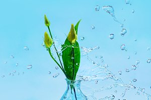 Glass botton with flower buds and a frozen splash of water on a blue background