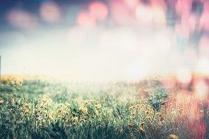 Lovely summer dandelion field