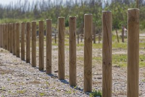 Wooden posts in a row.
