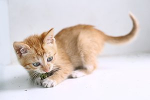 red hair kitten close up photo