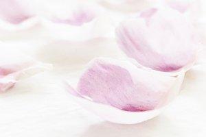 Pink Flower Petal Macro Photo